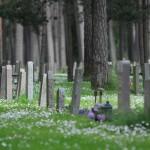 Stockholm: sírkert az erdőszélen