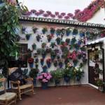 Jó szomszédi viszony: Córdobai virágos udvarok ünnepe