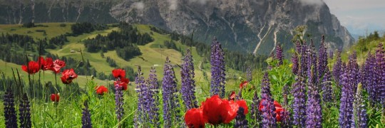 Travelzona_Del_tirol_Cimlap