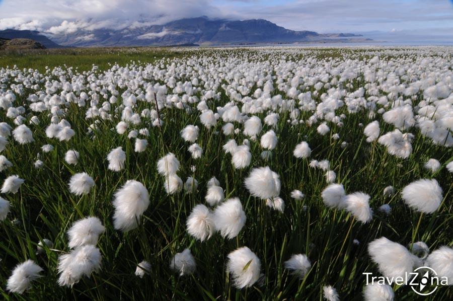 travelzona_Izland21