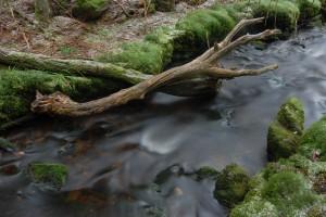 Bajor erdő nemzeti park