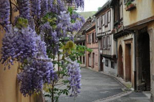 Ribeauville7