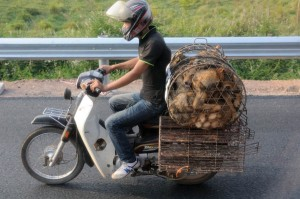 travelzona_Eszek_Vietnam14