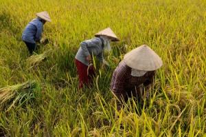 Észak-Vietnam