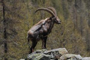 travelzona-koszali-kecske-12